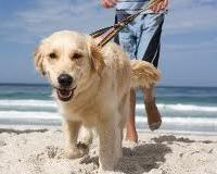 Собака поможет похудеть